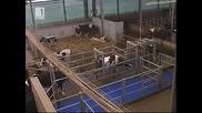 Бразди [19/02/2011) Уедряване на парцели земя, завод за мляко / 1ва част