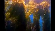 Какво се крие под водата.