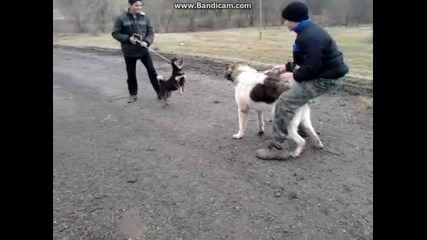 Каракъчанско куче