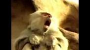 Refreshing Monkey