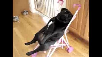 Луси си има столче