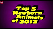 Топ 5 новородени животни на 2012 г.