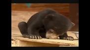 Заспиващо Мече