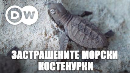 Ястребоклюните морски костенурки - под заплаха
