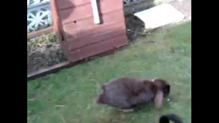 Обучен заек! Не е за изпускане!