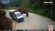 Какво се случва, ако попаднеш на див слон?