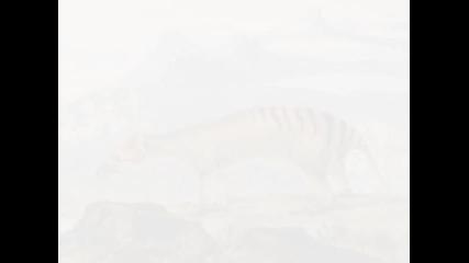 Историята на едно изчезнало животно,тасманийския Вълк