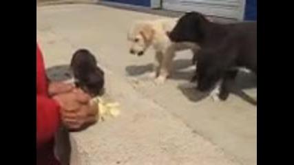 Кученца ядат ябълка