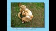 Смешни Муцуни На Заспали Кучета