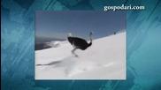 100% Смях! Щраус покорява ски писта