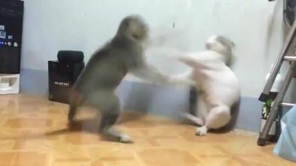 Котешки бокс