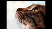 Снимки На Котенца