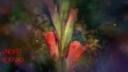 Шансон Наслаждение! Распускающиеся Цветы Лето !