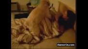 Куче се опитва да изнасили стопанката си