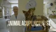 Acupuncture for pets: a revolutionary alternative to euthanasia
