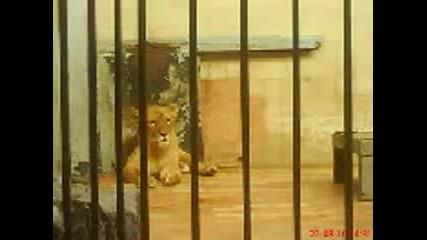 Снимки от зоогическата градина в град софия - 1 част