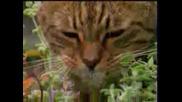 Дрогирани котки