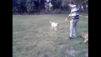 kavkazka i dva kangala 4 meseca