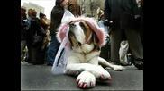 Смешни Снимки На Кучета