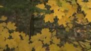 Ванда Мотор - Осень- Золушка