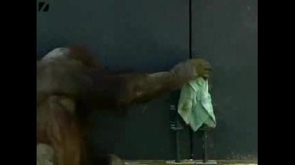 много добър помощник(маймуна)