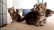 Танцуващи котета,следващи ритъма на музиката!