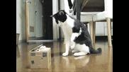 Котки танцуват на Gangnam stlye