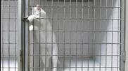 Умна котка излиза на свобода