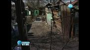 България се включва в защитата на бездомните кучета в съседна Румъния