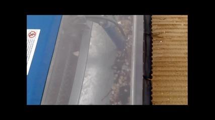 Машина за почистване на плаж Pinguino