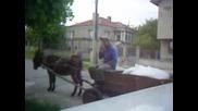 Лакътеца - Селският Бизнесмен