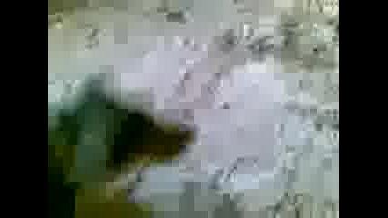 Борко