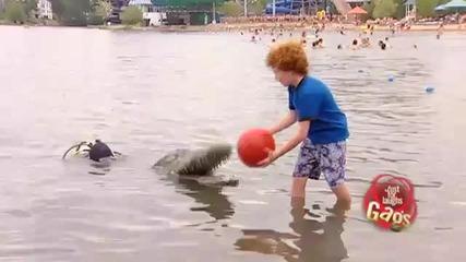 Скрита камера - Прецакване с крокодил!