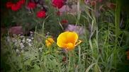 springgraph deshake