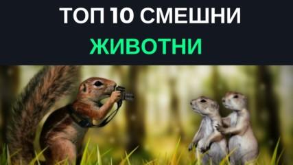 Топ 10 смешни животни