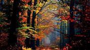 Pachelbel - Forest Garden Album