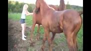 Вижте как конете се чифтосват