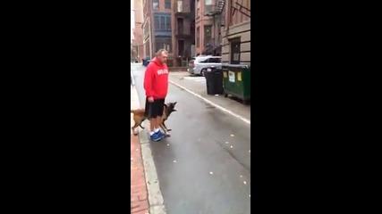 Куче готов да защити стопанина си от непознат!