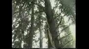 Berkstock - 1998 - Подуене Блус Бенд