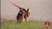 Скрита камера : Летящото куче (смях)