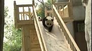 Панди се забавляват на пързалка
