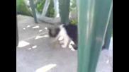 Котка и мишле