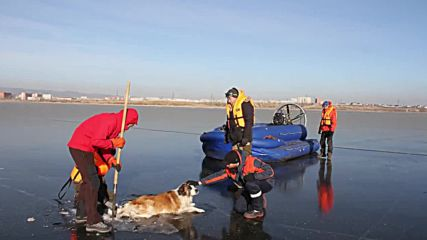 Ruff day! Rescuers pull dog from frozen lake in Chita