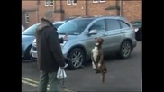 Куче уличен акробат