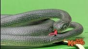 Смях! Голям майтап змия излиза от ipad - скрита камера