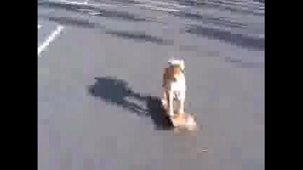 Куче Кара Скейтборд - 100% Смях!