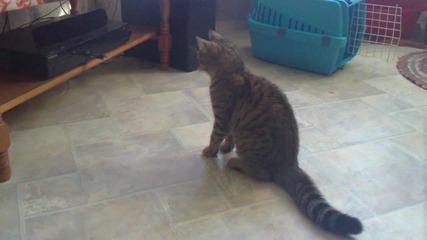 Коте срещу Dvd
