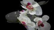 ✿♫♪ White orchid ... ... (music Bernward Koch) ... ... ✿♫♪