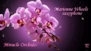 """Чудото """"орхидея"""" ... ... ( Marionne Wheels - saxophone)"""