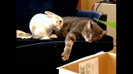 Красив момент от живота на един заек и едно коте!
